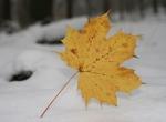 img_3647 Herbst im Winter