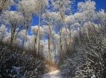 img_4617b Winterwald