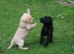 Douglas und Dobby